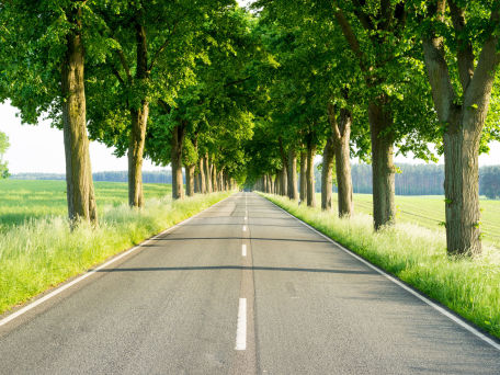 Allee in Brandenburg - © ThomBal/Fotolia.com