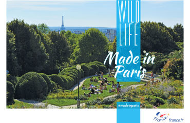 Wild life - Made in Paris