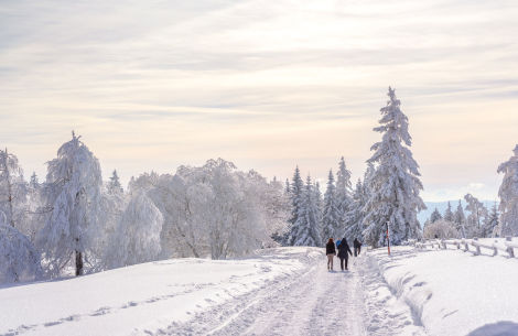 Spaziergänger im Schnee - © pure-life-pictures/Fotolia.com